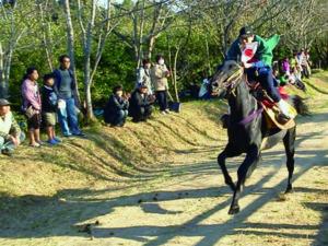 2012年11月3日 芳養八幡神社 『駆け馬』を見学